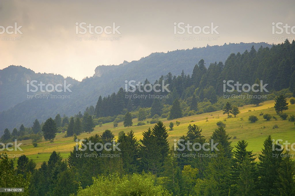 spectacular lighti on mountain meadow and fir trees royalty-free stock photo