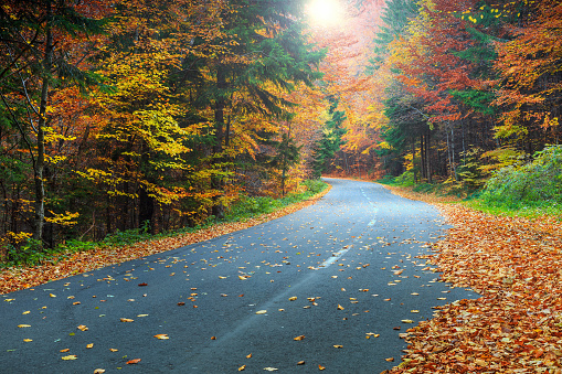 istock Spectacular romantic road in the autumn colorful forest 601933900