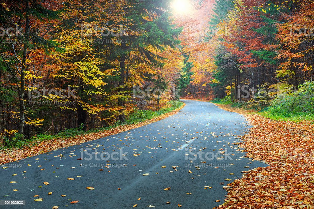 Spectacular romantic road in the autumn colorful forest stock photo