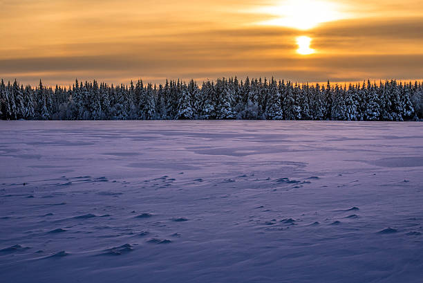 Spectacular winter sunset over an horizon of firs stock photo
