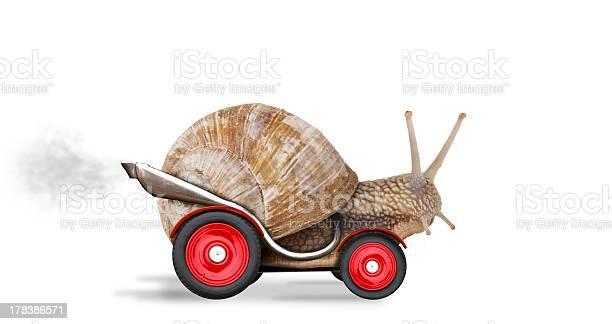 Speedy snail picture id178386571?b=1&k=6&m=178386571&s=612x612&h=32vlyypgtvr my auhura ccgsxbjh28yfxr1oqwrbe=