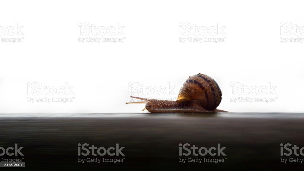 Speedy snail stock photo