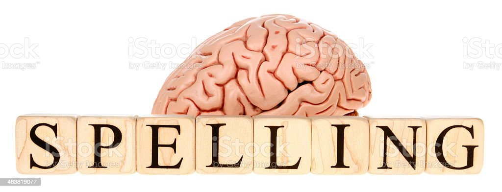 Spelling Brain royalty-free stock photo