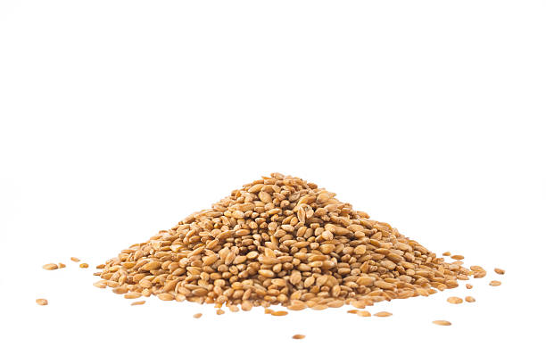 spelt heap isolated on white - barley stock pictures, royalty-free photos & images
