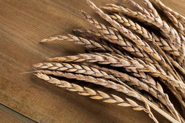 Spelt Spelt cereal of wooden background spelt stock pictures, royalty-free photos & images