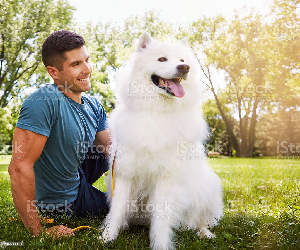 Spending a day in the dog park stock photo