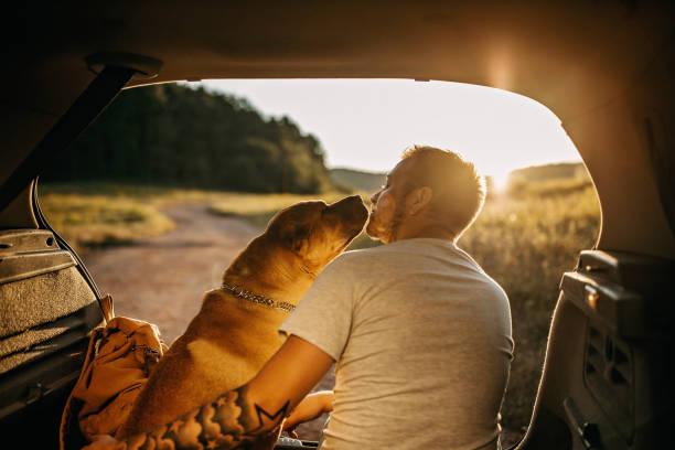 spending day with dog in nature - занятия на открытом воздухе стоковые фото и изображения