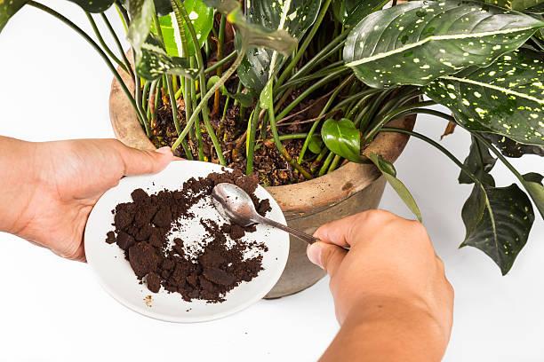 kaffee-gelände verbracht wird, wie natürliche pflanzen dünger - kaffeepulver stock-fotos und bilder