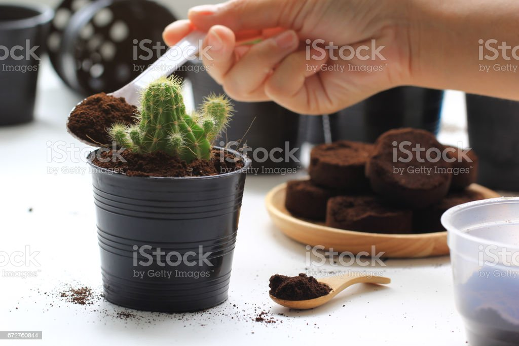 Spent grounded coffee applied to potted plant as natural fertilizer stock photo