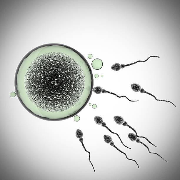 sperm and egg cell. microscopic - human sperm stock photos and pictures