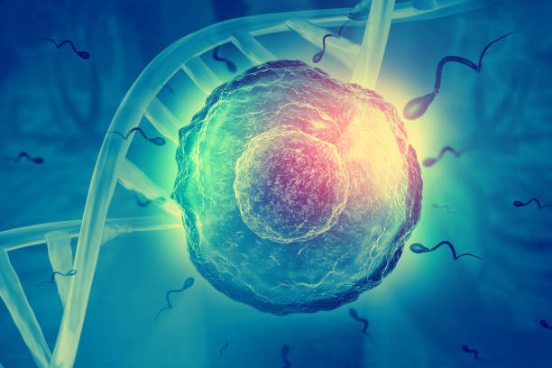 Sperm and egg cell on scientific background Sperm and egg cell on scientific background sperm stock pictures, royalty-free photos & images