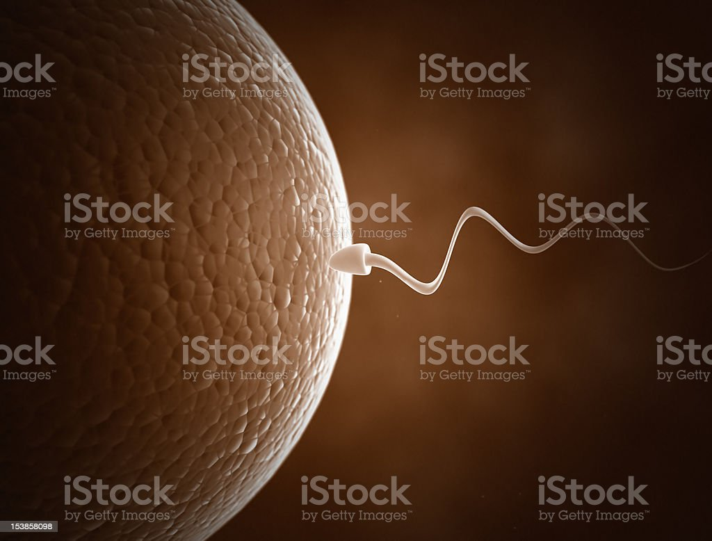 Sperm and Egg cell royalty-free stock photo