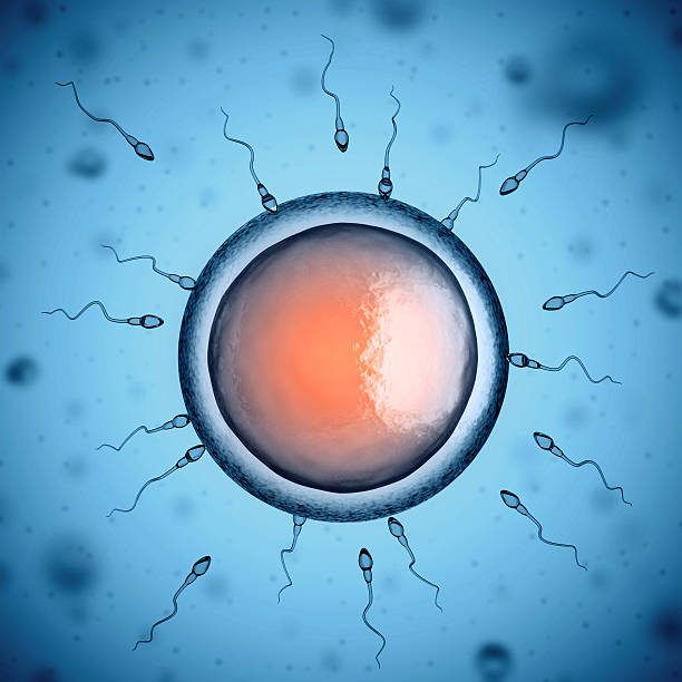 sperm and egg cell - human sperm stock photos and pictures