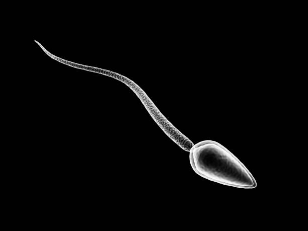 sperm cell - human sperm stock photos and pictures