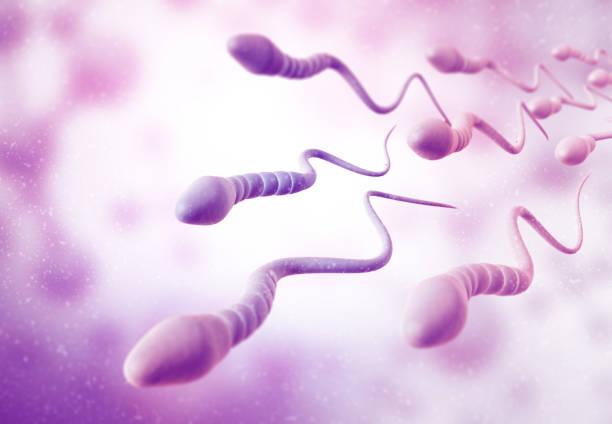 Sperm cells stock photo
