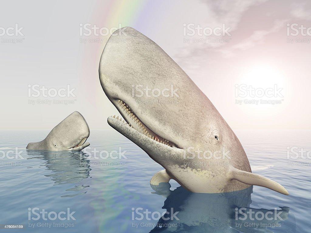 Sperm Whales stock photo