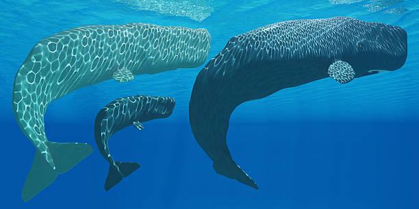 Sperme des baleines - Photo