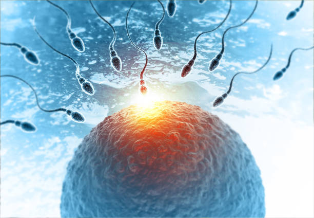Sperm with egg on abstract medical background stock photo