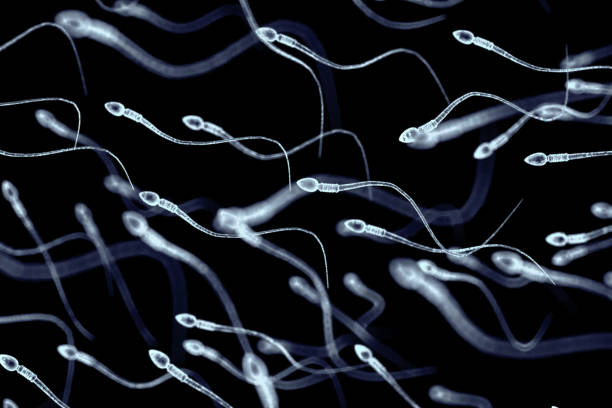 Spermatozoa, view under microscope, illustration of the appearan Spermatozoa, view under a microscope, illustration of the appearance of spermatozoa. sperm stock pictures, royalty-free photos & images