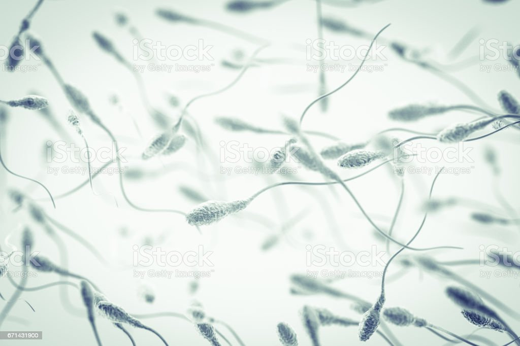 Spermatozoon stock photo