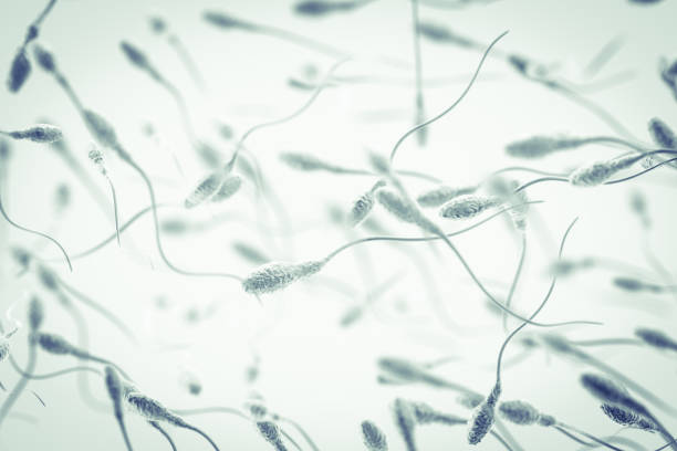 Spermatozoon Genetics background. 3D Render sperm stock pictures, royalty-free photos & images
