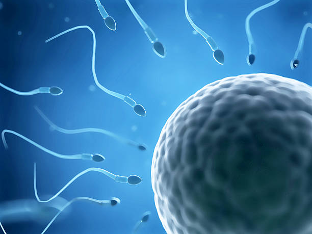 sperms and egg cell - human sperm stock photos and pictures
