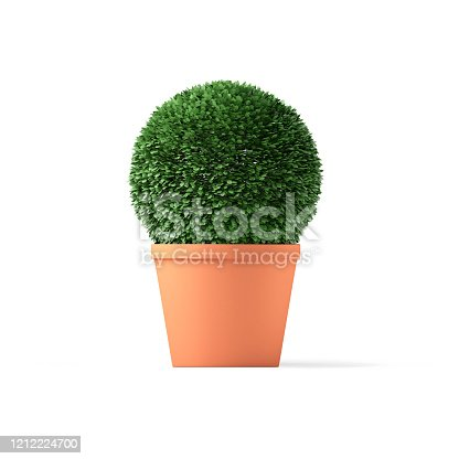 Boxwood topiary isolated on white with clipping path