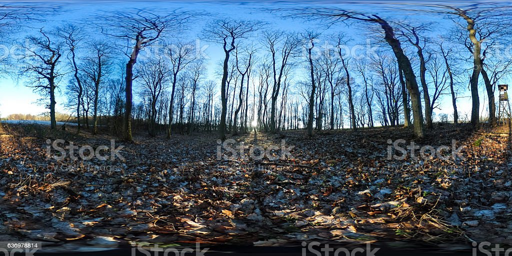 Spherical panorama of evening sun in autumn forest stock photo