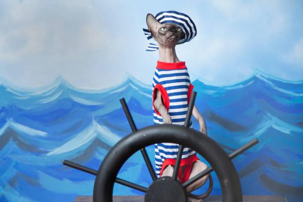 sphinx katze im matrosen kostüm mit abisolierten hemd und matrose cap unter hilfe eines schiffes - matrosin kostüm stock-fotos und bilder