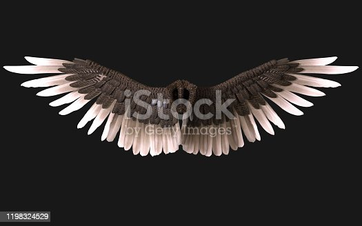 3d Illustration Sphinx Wings, Black Wing Plumage Isolated on Dark Background with clipping path.