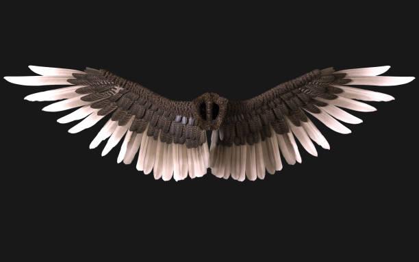 Sphinx vleugel verenkleed geïsoleerd op donkere achtergrond foto