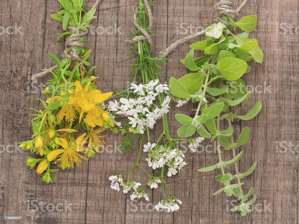 spices on the wooden background royalty-free stock photo