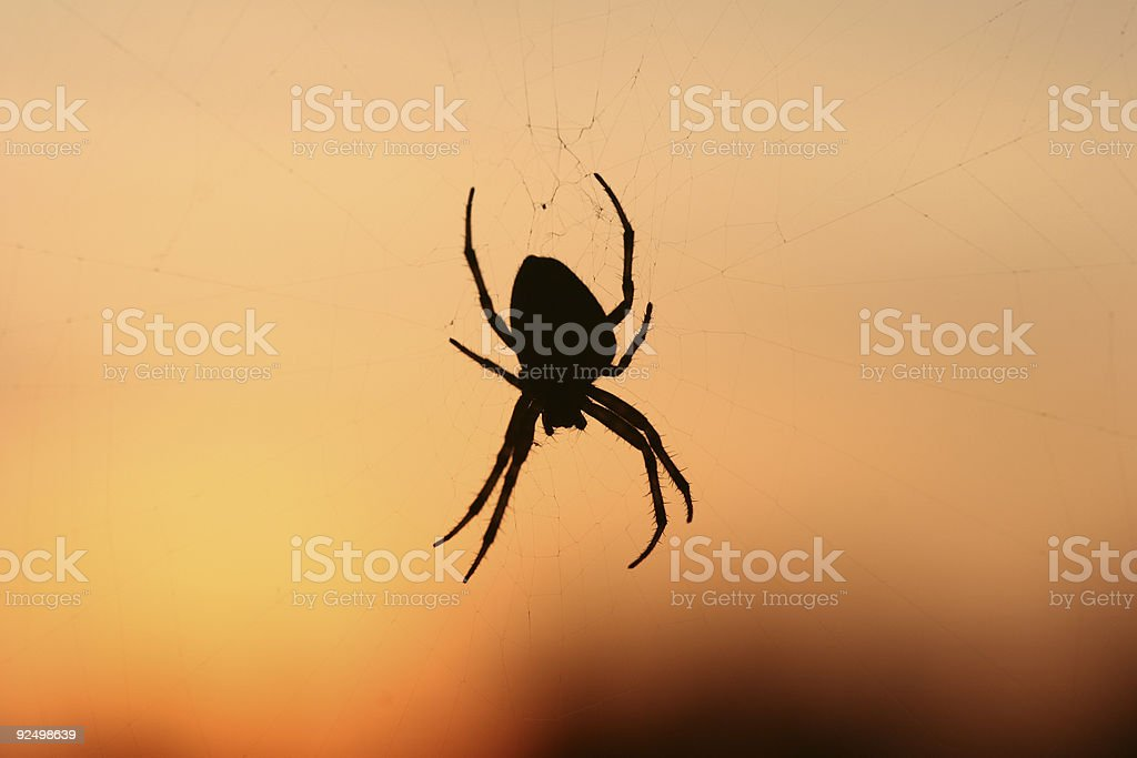 spider 01 royalty-free stock photo