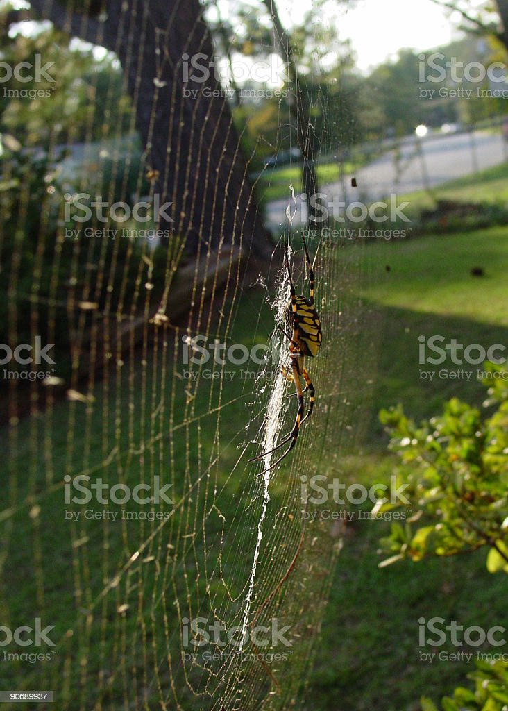 spider 4 royalty-free stock photo