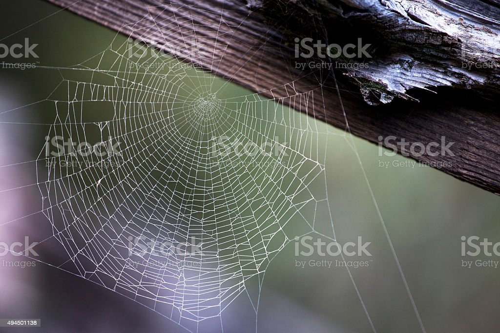 Spider and Architecture stock photo