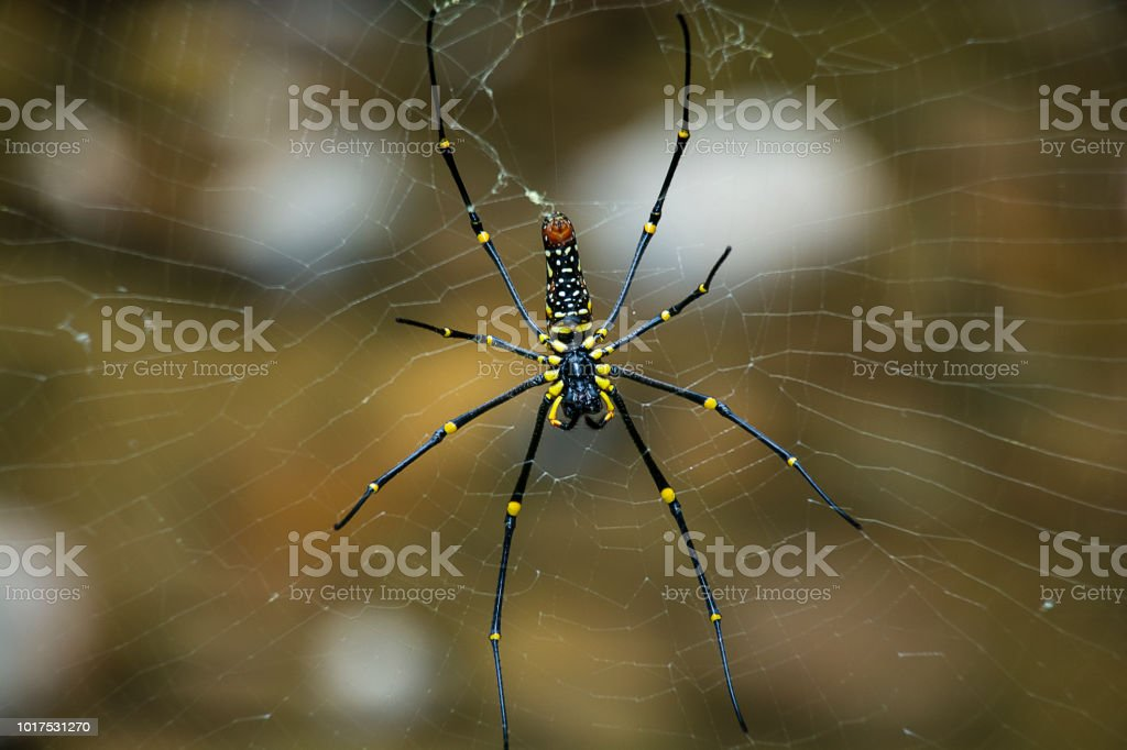 Spider and cobweb natural background. stock photo