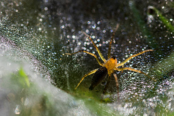 spider and dews in morning - omg stock photos and pictures
