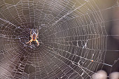 Photo Picture of a Spider and his Web