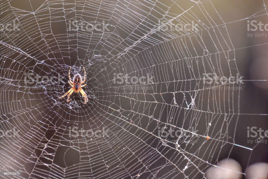 Spider and his Web stock photo