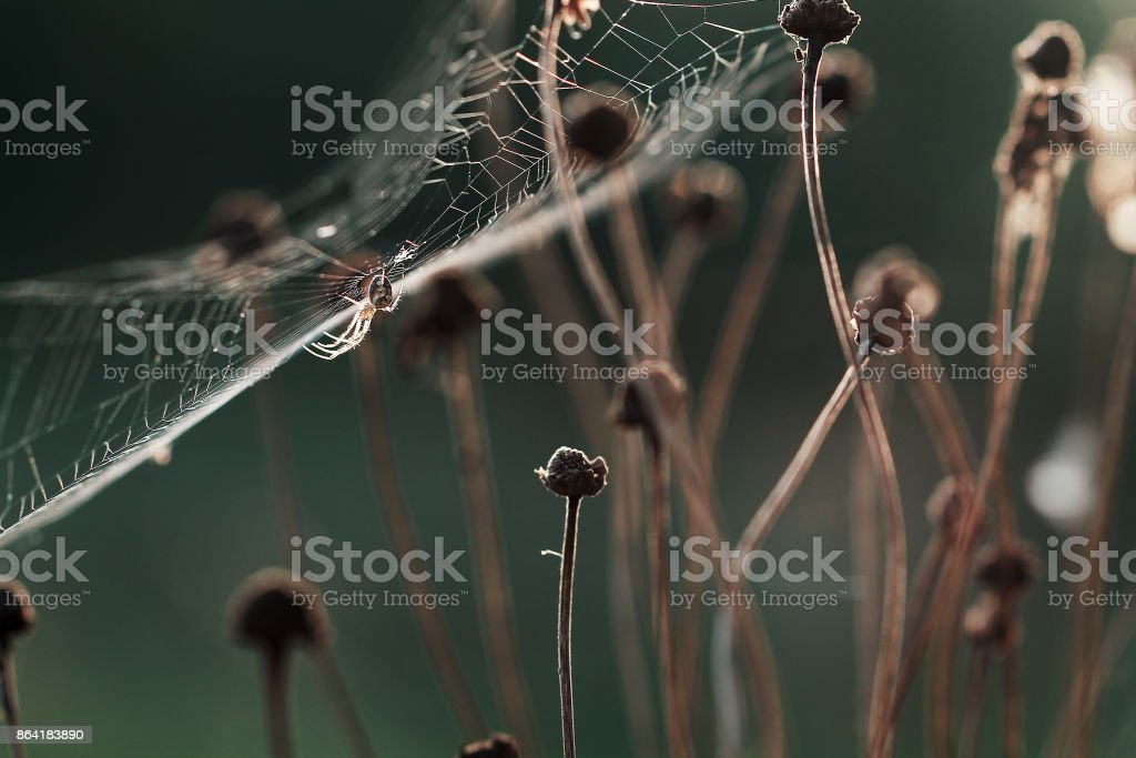 spider and net in nature. Forest outdoor photo of insect royalty-free stock photo
