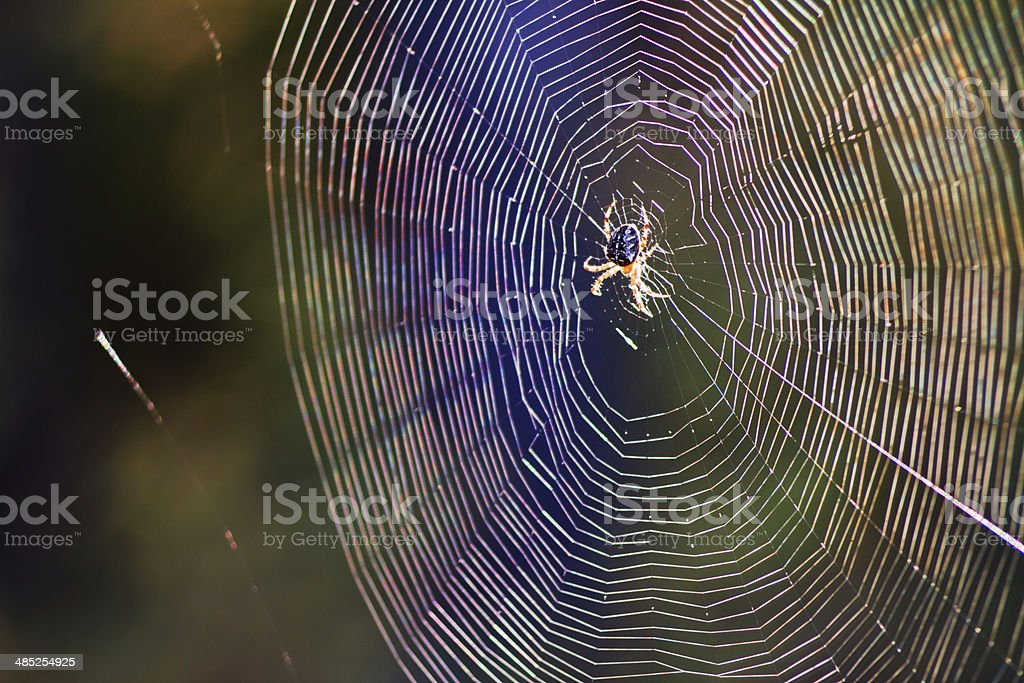 Spider and spider web stock photo
