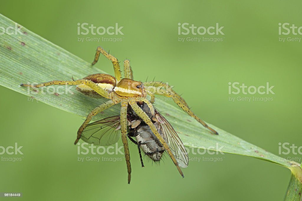 Spider and the Fly. royalty-free stock photo