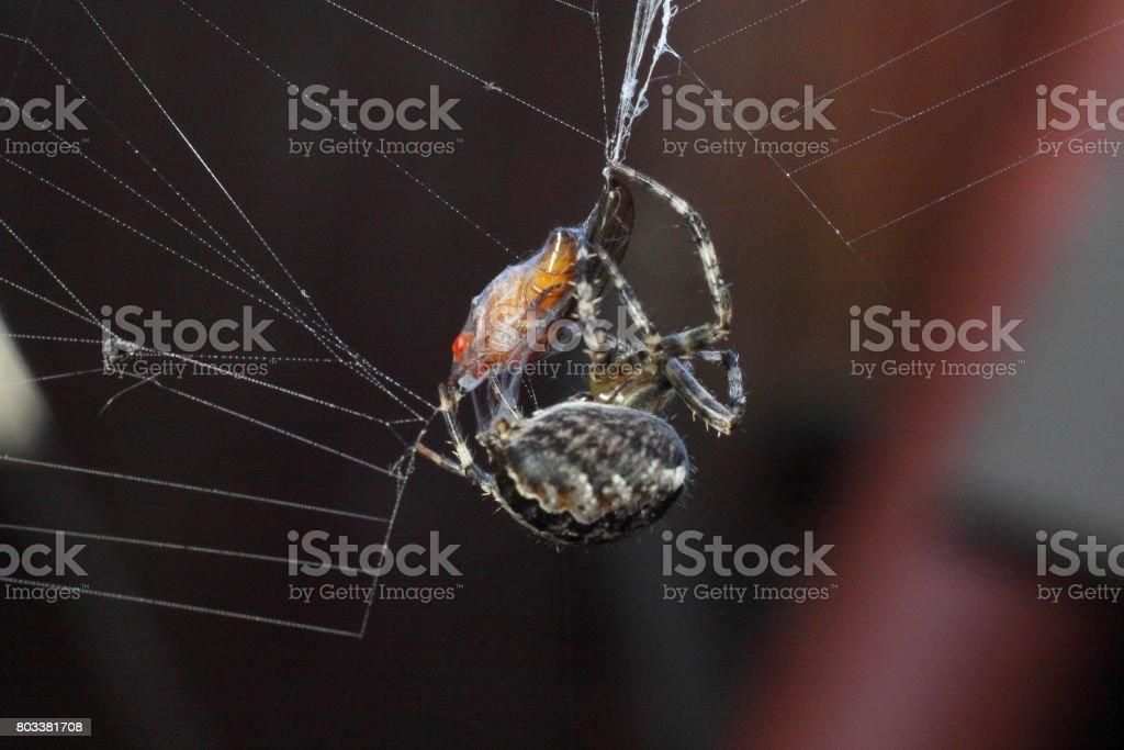 Spider and victim stock photo