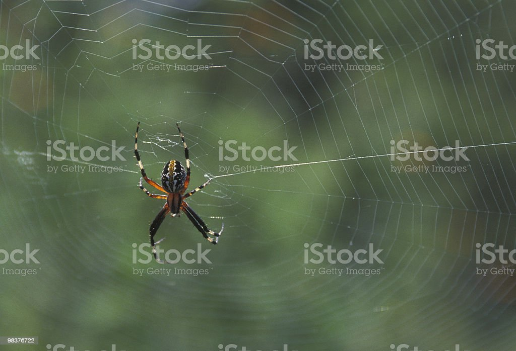 spider and web royalty-free stock photo
