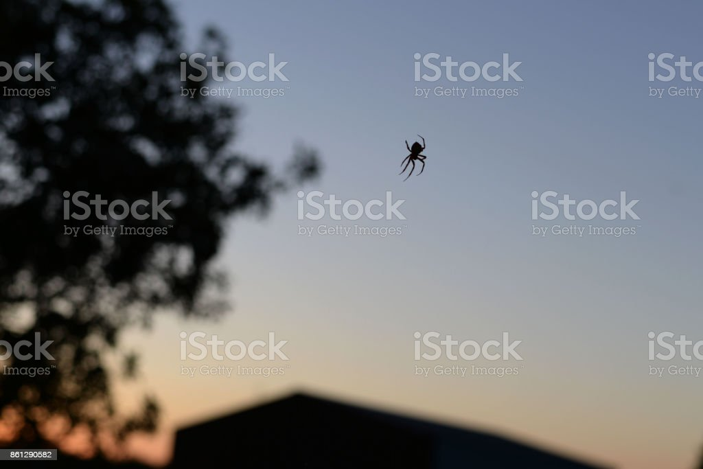 Spider at Sunset stock photo