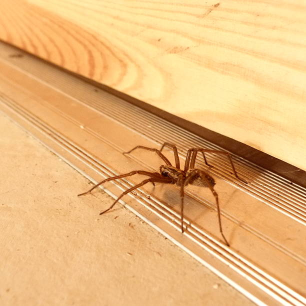 Aranha na porta - foto de acervo