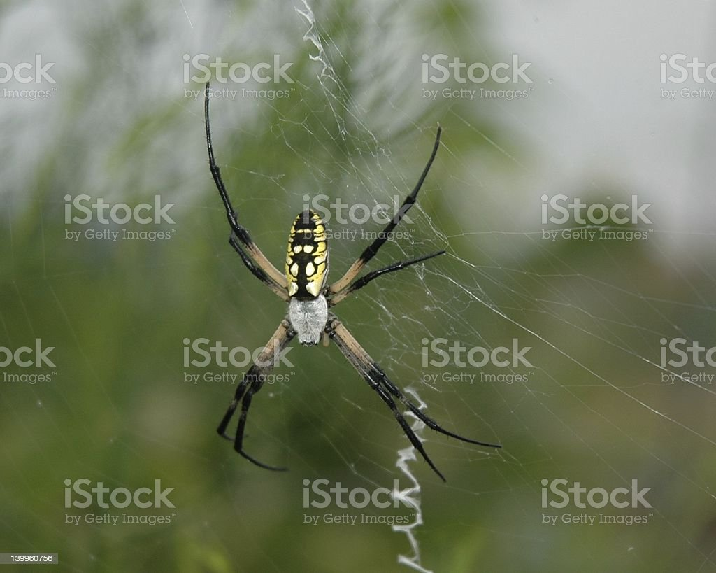 spider attack royalty-free stock photo