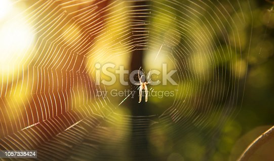 spider autumn forest