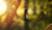 spider autumn forest