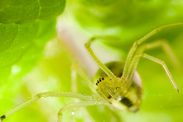 Spider Between The Leaves stock photo